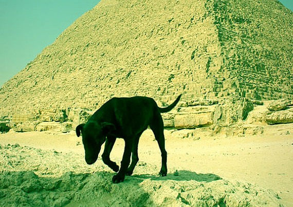 Dog by the Pyramid