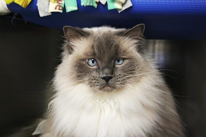 SHS Pet Publicist
