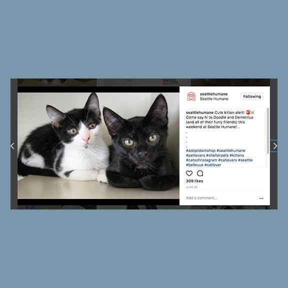 Seattle Humane Pet Publicist